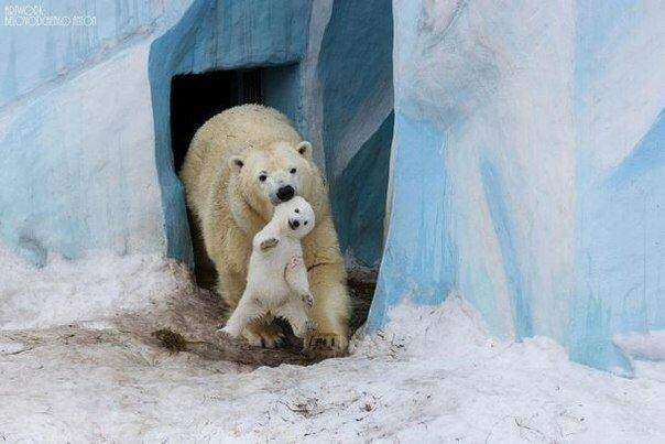 0 17a6e0 2c6aefe6 XL - Как животные заботятся о детенышах