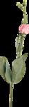 Skazochnik
