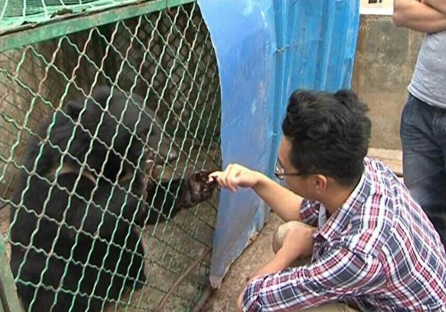 5. Один из медведей играет с сотрудниками спасательного центра.