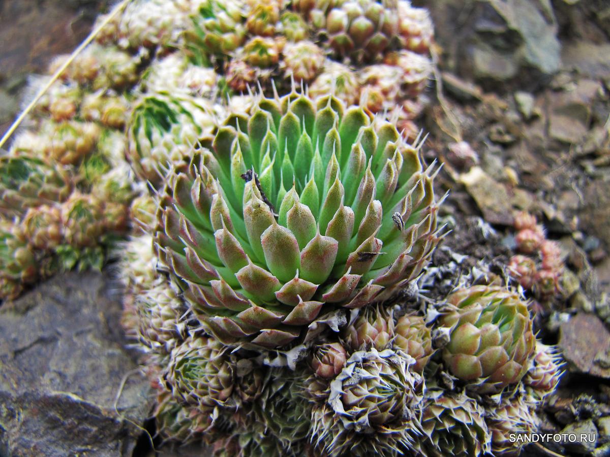 Растительность Пугачёвской горы в Троицке