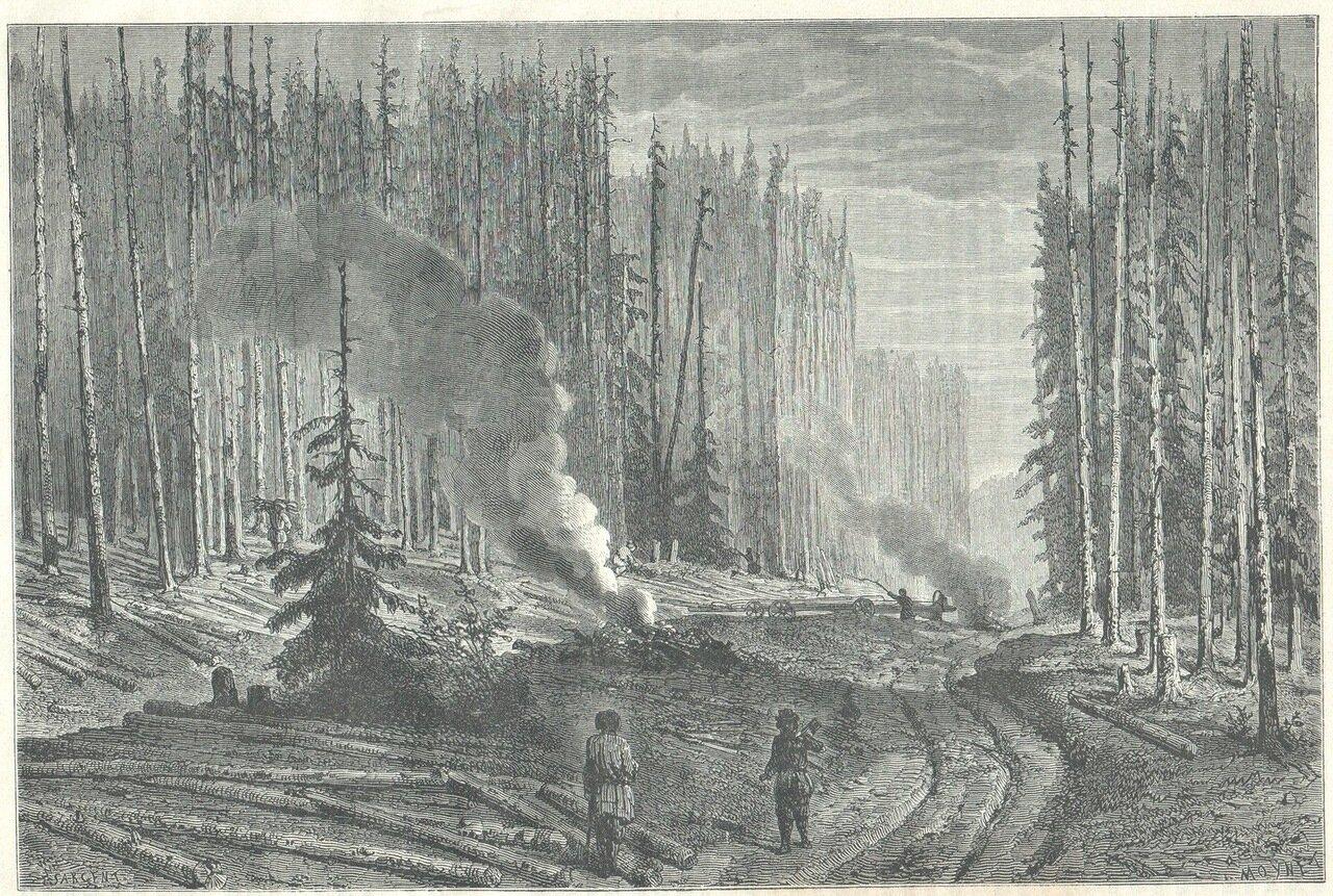 1872. Вырубка леса