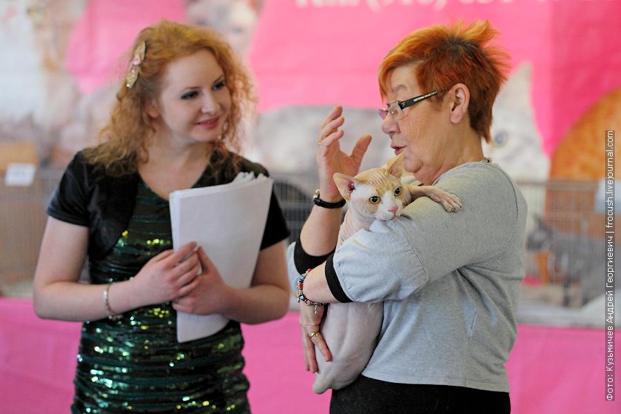 кот Канадский сфинкс выставка кошек
