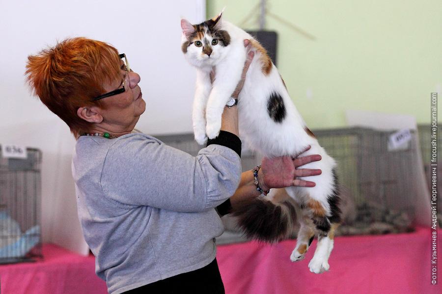 Москва Мейн-кун Кошка выставка