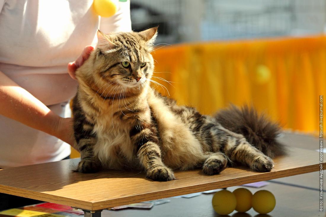 выставка кошек содружество фотографии