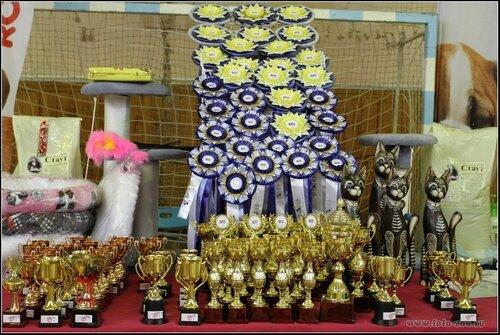 """Международная выставка кошек AFC """"Удивительные кошки"""", 10 мая 2015, Сургут (Россия) - Страница 3 0_10c391_7d1e5a9c_L"""