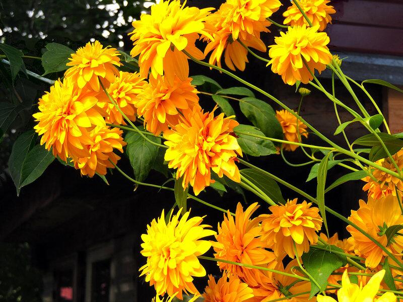 Цветы у горелой бани