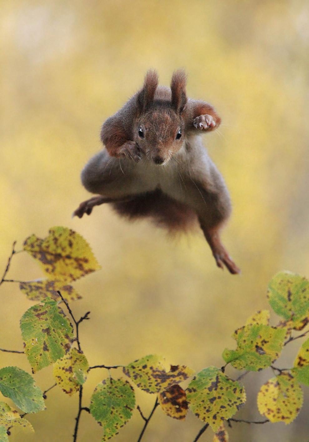 15. Секта. Бурундуки. (Фото Aaron Karnovski | Comedy Wildlife Photography Awards):