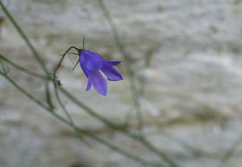 последний цветок осени 2013