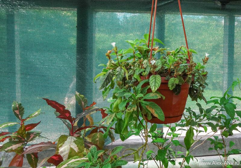 Некоторым растениям явно не хватило места на полках.