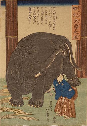 УЁситоё Из Индии привезли слона.jpg