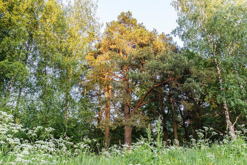 парк усадьба Узкое