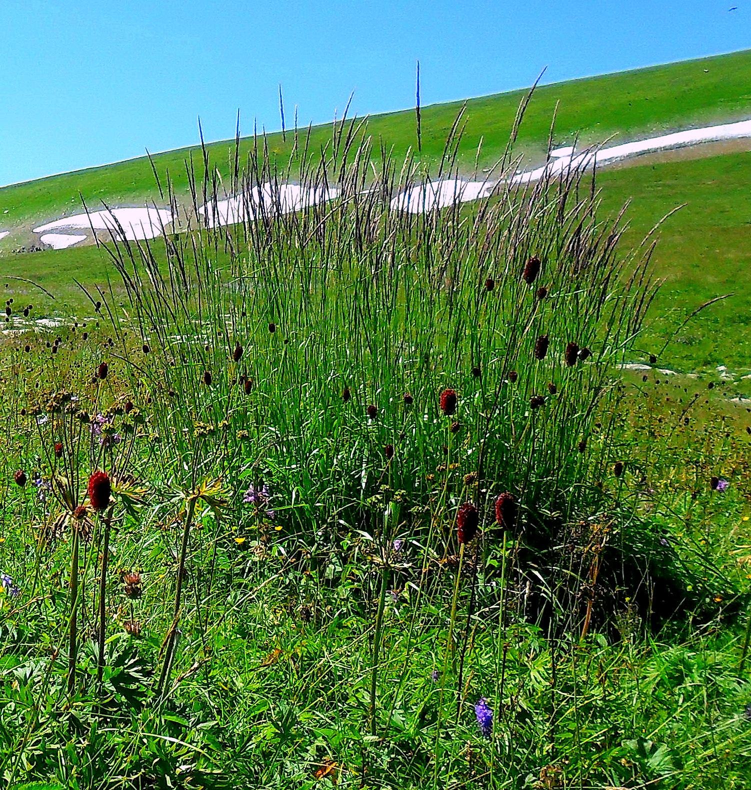Добро пожаловать ! Лагонаки, снег и травы.
