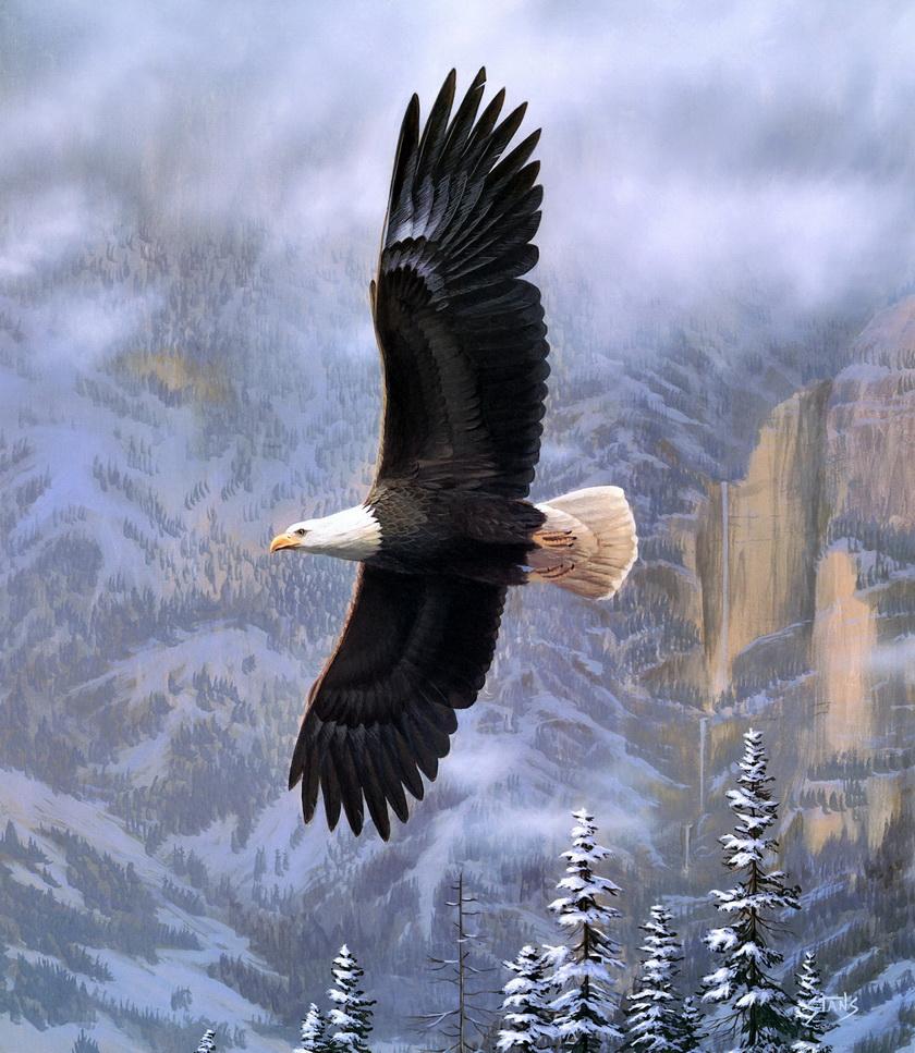интерьера картины и фото орла в полете поверить то