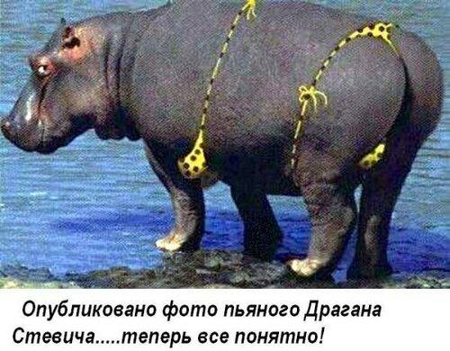 http://img-fotki.yandex.ru/get/9824/97761520.1de/0_843e8_b1f01253_L.jpg