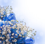 Spring white and blue flowers (5).jpg