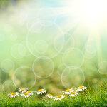 Spring (5).jpg