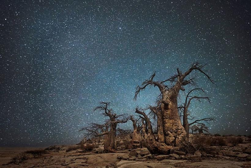 Фотограф Бет Мун: древние деревья Африки под звездным небом 0 13623c 63ba5a7b orig