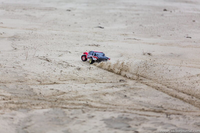 Приключения песчаного лиса