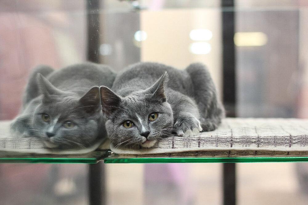 Гостиница для кошек в Москве Cats Dream Hotel