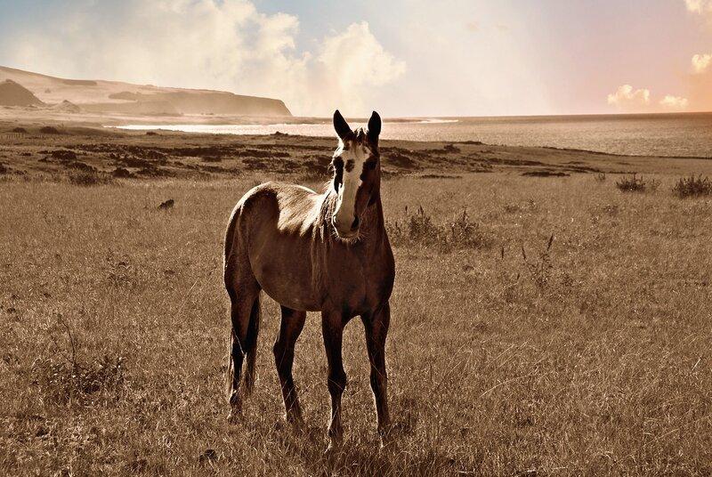 Мир, где пасутся дикие лошади...