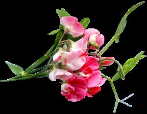 Цветочки png