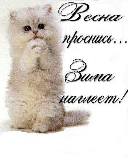 Праздничная открытка на Всемирный день кошки 1 марта - Красивые поздравительные открытки с Всемирным днём кошек 2021
