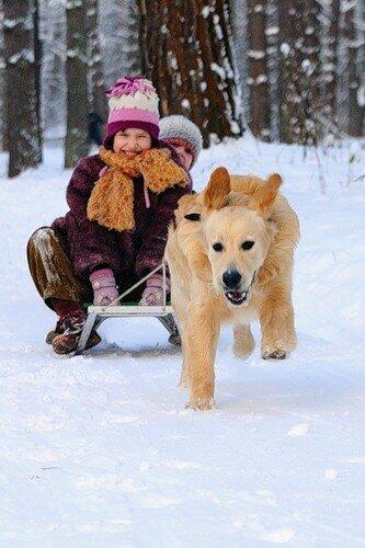 санки, зима, собаки, дети