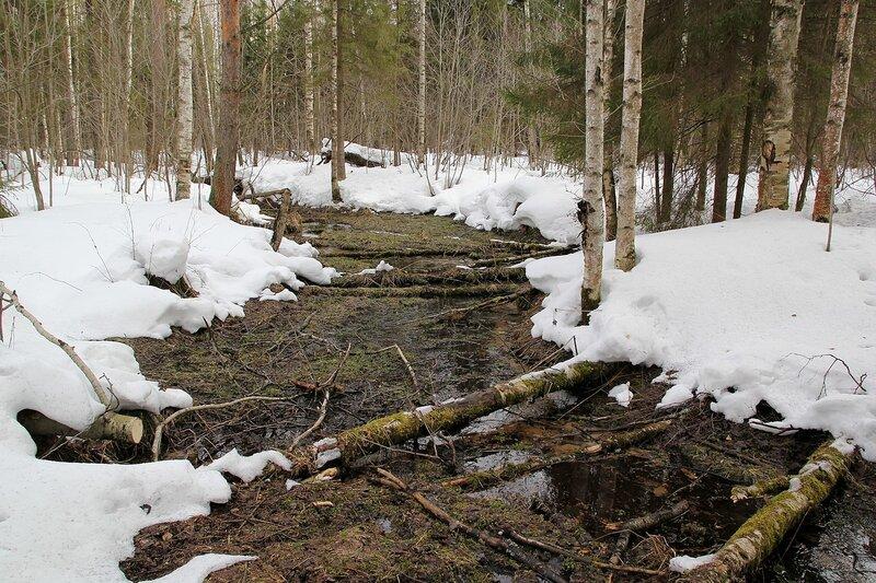 ручей среди снега в порошинском лесу