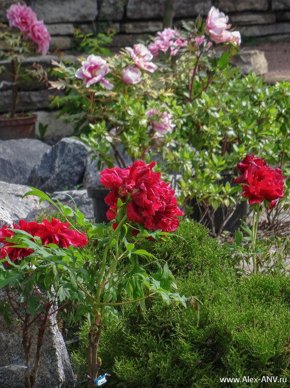 Цветы в японском садике