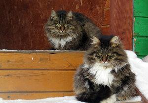 Муся и Тишка