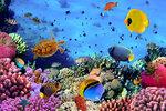 Underwater (3).jpg