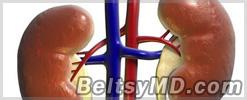 Сенсация: впервые выращены почки из стволовых клеток