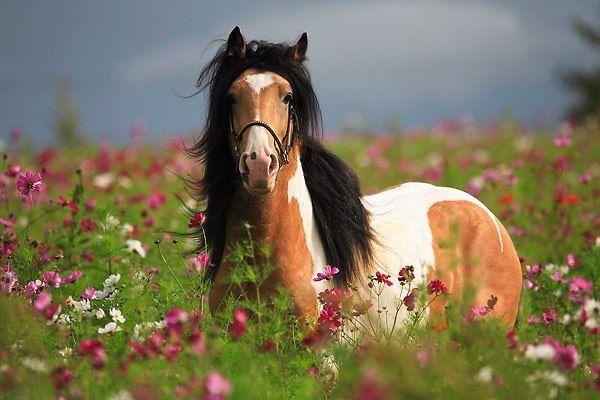 Животные и цветы