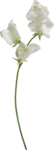 Holliewood_SpringFaeries_Flowers11.png