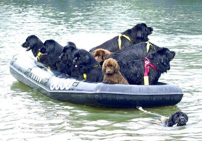 Собаки-спасатели приходят на помощь