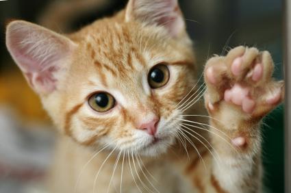 кошка топчет вас лапками фото