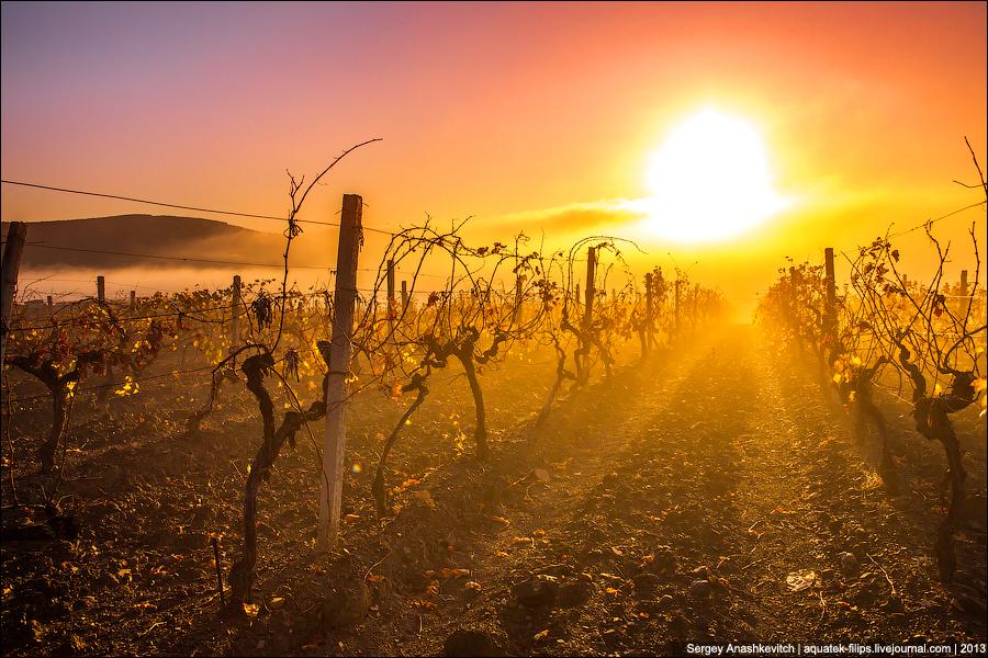Виноградный туман