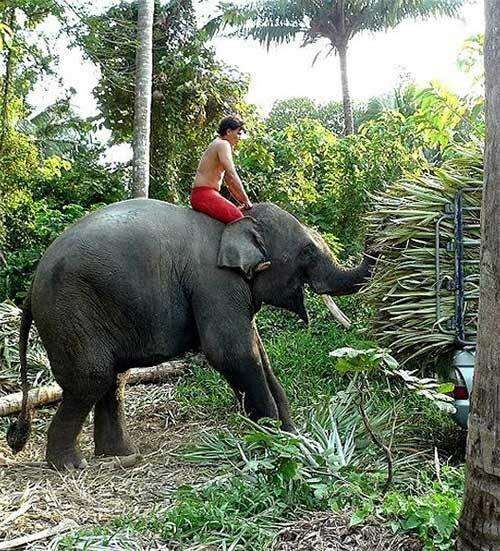 Как купают слона
