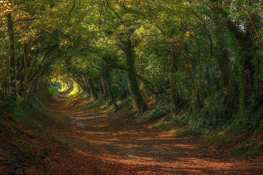 Живой тоннель в графстве Сассекс (Англия)