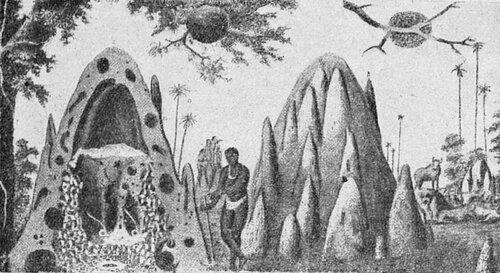 куда направлены узкие бока гнёзд термитов в австралии?