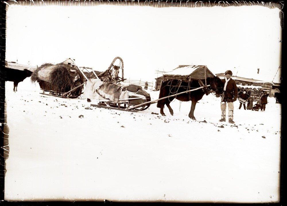 1913. Село Ларьяк.  Запряженные лошади.