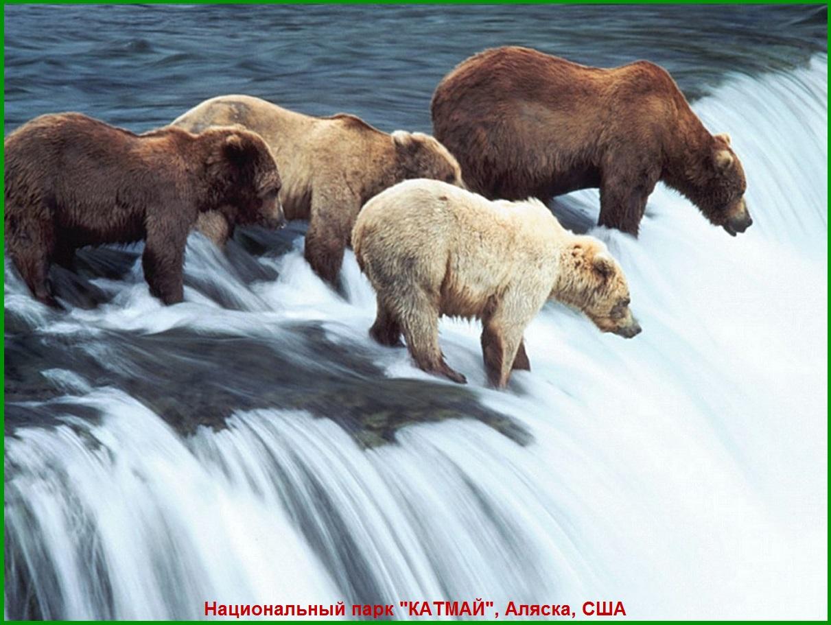 Национальный парк КАТМАЙ, медведи. Аляска, США