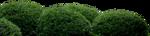 Flora ClipArt 189.png