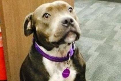 Потерявшегося щенка нашли в семистах километрах от дома