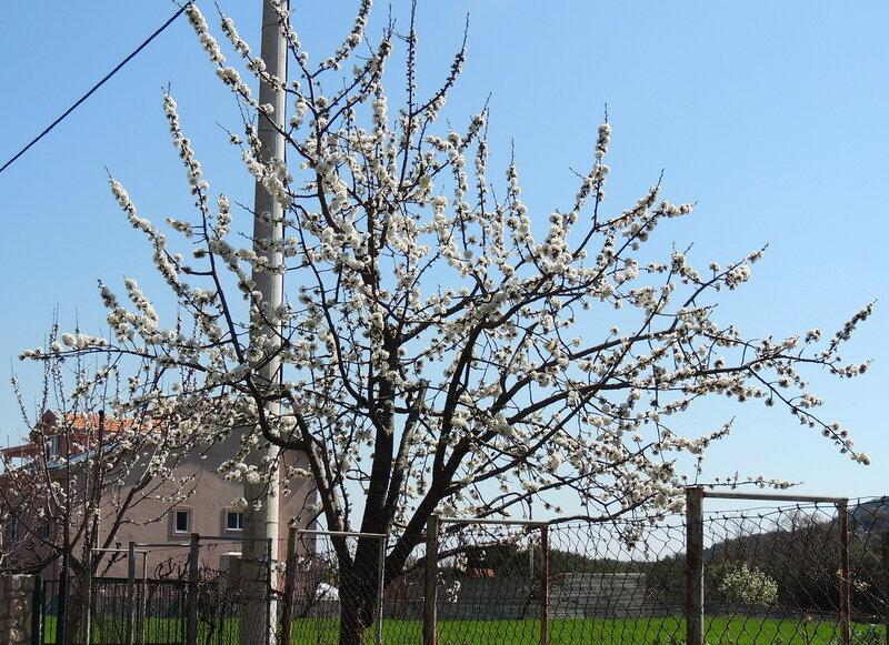март в Черногории