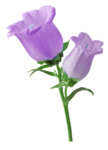 Flower Hallow (12).png