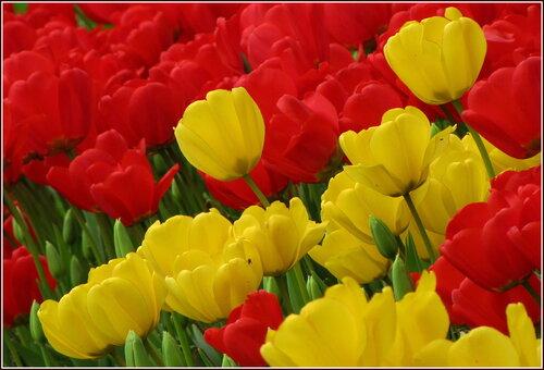 То жёлтым, то алым весна расцветает..