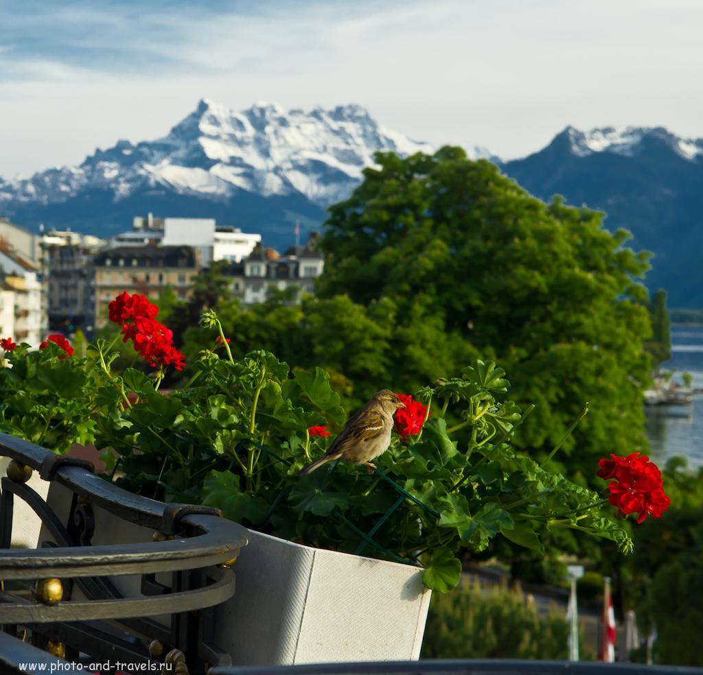"""Фото 6. Отчет о поездке в Швейцарию. Один вечер в городе Монтрё. Здесь диафрагма f/9 и точка фокусировки близко к объективу. Чтобы фон был тоже резким, нужно было """"поджать"""" диафрагму сильнее (может до f/16 и менее)"""