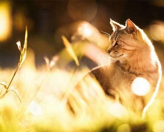 Эстетичные и артистичные коты