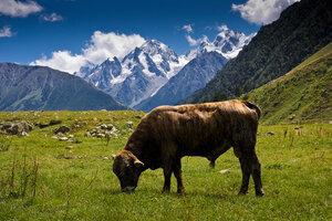 Кавказ (20100821 - 13.30.58).jpg